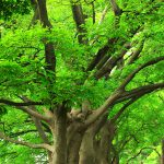 tree_woods_00022