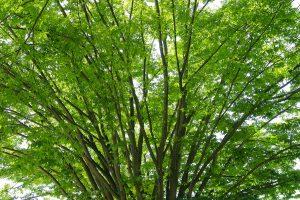 tree_woods_00048