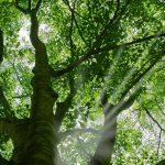 tree_woods_00090