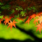 autumn-leaves_00008