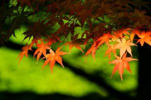 autumn-leaves_00008
